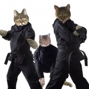 The Ninja Cat Journals